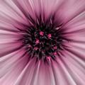 Pink Sun. by Themida Zidrou