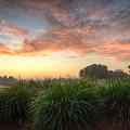 Pink Sunrise by Ronald Kotinsky