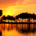 Pink Sunset And Palms by William Waterfall - Printscapes