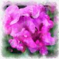 Pink Sweet Peas by Judi Suni Hall