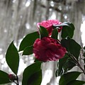Pink by Teresa Palmer