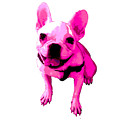 Pink Terrier by Linda Swon