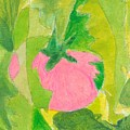 Pink Tomato by Jerry Hanks