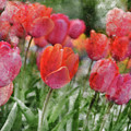 Pink Tulip Macro by Brandon Bourdages