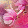 Pink Tulip Magnolia In Spring by Jai Johnson