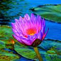 Pink Water Lily by Pamela Walton