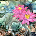 Pink Waterlily by Sherry Shipley