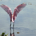 Pink Wings by Kimberly Mohlenhoff