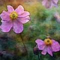 Pink Wood Rose 3730 Idp_22 by Steven Ward