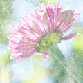 Pink Zinnia On Bokeh Background by Jim And Emily Bush