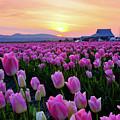 Pinks At Sunset by Idaho Scenic Images Linda Lantzy