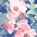 Pinks by Jackie Farnsworth