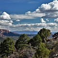 Pinon Forest At The Top Of Kolob Canyon by Heidi Fickinger