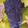 Pinot Noir Ready For Harvest by Mike Robles