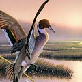 Pintail Duck-3rd Place Wi by Daniel Pierce