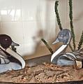 Pintail Ducks by Donald Paczynski
