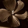 Pinwheel by Clayton Bruster