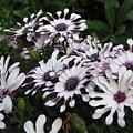 Pinwheels by Kathy Roncarati