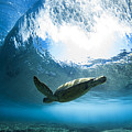 Pipe Turtle Glide by Sean Davey