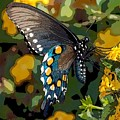 Pipevine Swallowtail Butterfly by David Smith