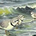 Piping Plovers At The Shore by Tara Milliken