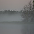 Piprell Lake 4 Am Mist by Andrea Lawrence