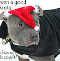 Pit Bull Christmas Two by Sue Long