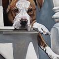 Pitbull Stare by Heidi Parmelee-Pratt