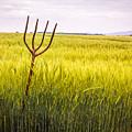 Pitch Fork In Wheat Field by Amanda Elwell