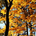 Pitchfork In Autumn Light by Scott  Mosel