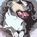 Pittbull Colors by Michael Frizzell