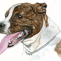 Pittbull Dog by Frances Gillotti