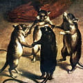 Plague: Dance Of The Rats by Granger