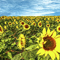 Plains Sunflowers by Scott Cordell