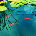 Plaisir Aquatique by Aimelle