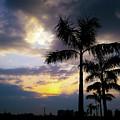 Plan Trees And Moody Sky by Atullya N Srivastava