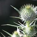 Plant 09-01-18 by Maurio Francois