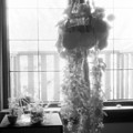 Plant In The Window  by Lyle Crump