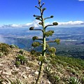 Plant On Volcano Slope by Will Fox