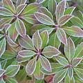 Plant Pattern by Douglas Barnett