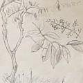 Plant Study by Alejandro Lopez-Tasso