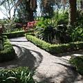 Plantation Garden by Carol Groenen