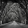 Plantation Oak Alley by Perry Webster