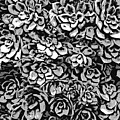 Plants Of Black And White by Phil Perkins