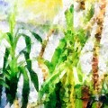 Plants by Rita Koivunen