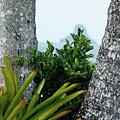 Plantside The Island by Nick Mattea