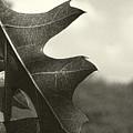 Platinum Leaves 3 by Jeff Breiman
