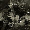 Platinum Leaves 4 by Jeff Breiman