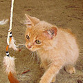Play Time With Kitty by Shannon Story
