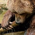 Play With Me Grizzly by ShadowWalker RavenEyes Dibler